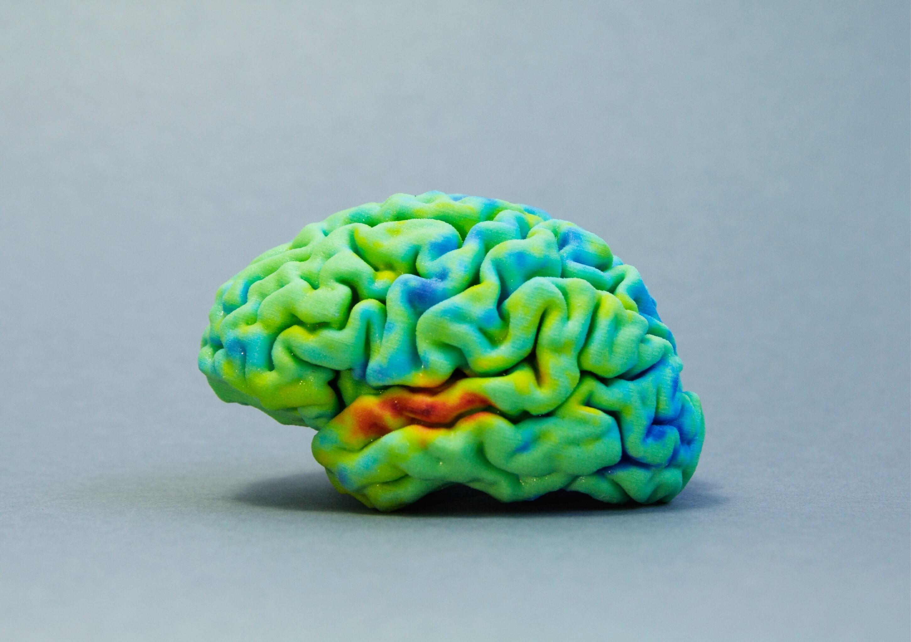 MRI Data for Printing Brain Design